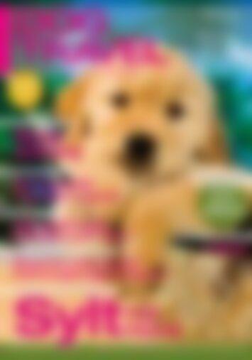 DOGandTRAVEL Sylt mit Hund (Vorschau)