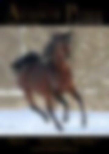 Arabische Pferde IN THE FOCUS Nr. 4/2017 (Vol. 12)